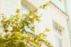 外部雨视窗 一棵树的黄色叶子在秋天 雨天在城市 在雨珠的选择聚焦,被弄脏 库存照片