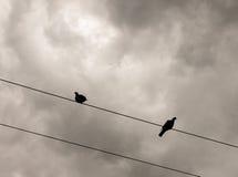 外面两只鸽子在火车电线剪影顶部 库存照片