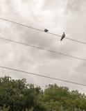 外面两只鸽子在火车电线顶部 库存照片