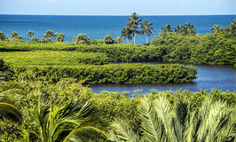 外面蛤蜊海湾和墨西哥湾那不勒斯佛罗里达 库存图片