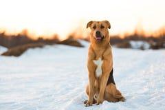 外面逗人喜爱的混杂的品种狗 在雪的杂种动物 库存照片