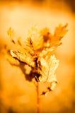外面晴朗的温暖的秋天天 库存照片