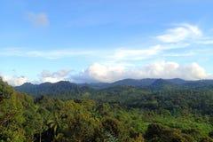 外面巴杜伊部落的森林 免版税库存照片