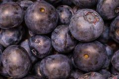 多个新鲜的蓝莓 库存图片