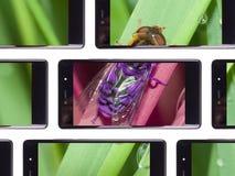 多个智能手机屏幕 库存照片