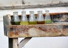 多个海藻种类样品在玻璃烧杯的 免版税库存照片