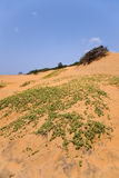 多云停止的沙子天空结构树 免版税库存照片