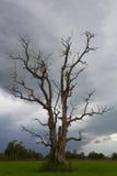 多云停止的结构树 库存照片