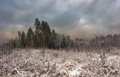 多云包括的天空雪木头 免版税库存照片