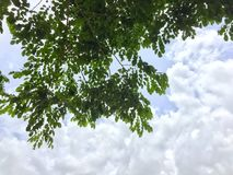 多云和分支  库存照片