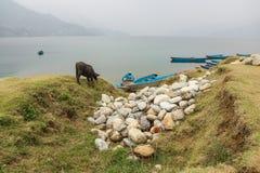 多云天气的Phewa湖 免版税库存照片