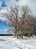 多云天空和和金黄阳光在光秃的树在积雪的领域边缘 库存图片