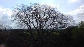 多云天空和死的树 免版税库存图片