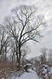 多云天空多雪的跟踪冬天 免版税库存图片