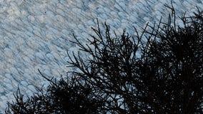 多云天空被遮暗在树 免版税库存图片
