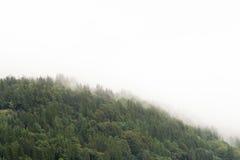 多云挪威的森林 免版税库存照片
