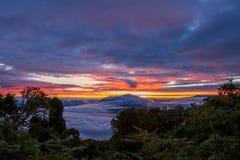 多云日出在树之间的坦桑尼亚 免版税库存照片