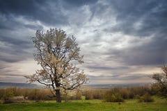 多云春天 开花的结构树 进展的春天 免版税图库摄影