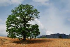 多云查出的天空结构树 免版税库存图片