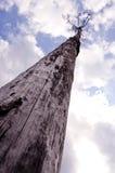 多云概念死亡老到达的演替系列的天空结构树 库存图片