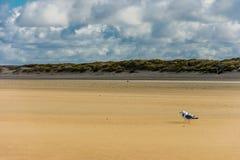 多云的海滩 库存图片