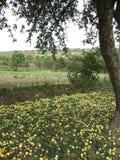 多云秋天天照片的苹果树 库存图片