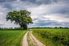 多云荷兰夏天风景在Delden Twente,上艾瑟尔省附近的6月 免版税库存图片