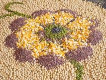 多五谷,玉米,豆 库存图片