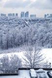 多伦多冬天早晨 库存图片
