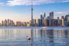 多伦多地平线和天鹅游泳在Ontario湖-多伦多,安大略,加拿大 库存照片