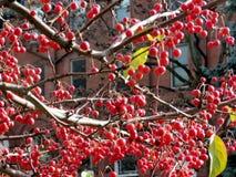 多伦多大学三一学院山楂树分支2016年 免版税库存图片