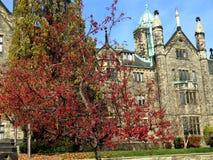 多伦多大学三一学院山楂树树2016年 免版税图库摄影