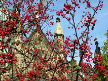 多伦多大学三一学院山楂树2016年 免版税库存照片