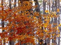 多伦多秋天森林2016年 免版税图库摄影