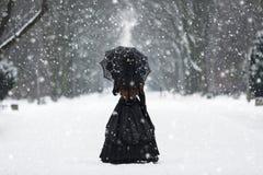 维多利亚女王时代的礼服的神奇孤独的妇女 免版税图库摄影