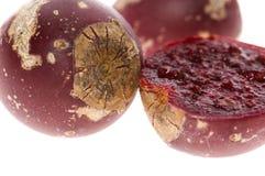多刺仙人掌榕属印度仙人掌的梨 免版税图库摄影