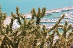 多刺的仙人掌在海岸增长 免版税图库摄影