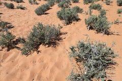 多刺的植被 免版税库存照片