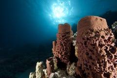 多刺的海绵管 库存照片