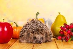 多刺的灰色猬坐桌,在莓果、蔬菜和水果旁边 免版税库存图片