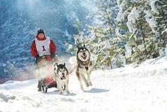 多壳拉雪橇狗赛跑 库存照片