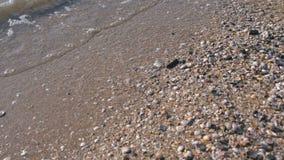 多壳海滩是有小波浪的海 影视素材