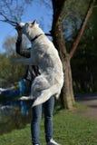 多壳的品种的一条白色狗跳 库存照片