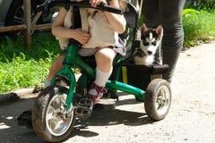 多壳的开会可爱的小的小狗在三轮车树干的  免版税库存图片