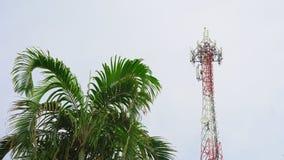 多孔的通信、互联网和电视电信塔反对蓝天有棕榈树的 影视素材