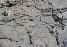 多孔石头,特写镜头 免版税库存照片