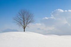 多孔黏土颜色横向偏僻的rgb空间结构树冬天 免版税图库摄影