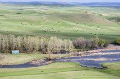 多小山干草原在春天 免版税库存照片