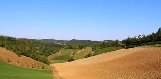 多小山风景葡萄耕种 库存照片
