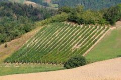 多小山风景葡萄耕种 免版税库存照片